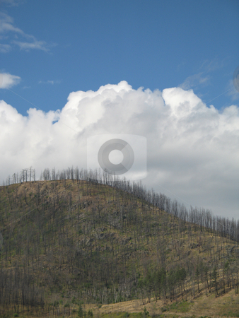 Mountain after a forest fire stock photo, Mountain after a forest fire by Mbudley Mbudley