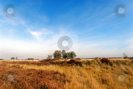 Heathland stock photo, Yellow and brown heathland and sky with some twirling clouds by Wino Evertz