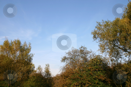 Tree Border stock photo, A border of trees with a place blue sky by Steve Smith