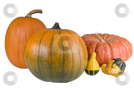 Autumn is here and Halloween stock photo, Pumpkins and gourds isolated with a clipping path by RCarner Photography