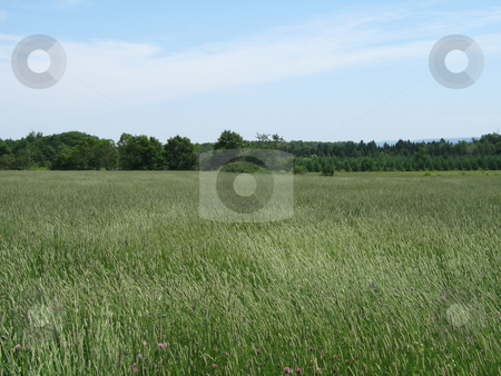 Green agricultural field stock photo, Green agricultural field by Mbudley Mbudley