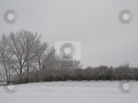 Winter field and forest stock photo, Winter field and forest by Mbudley Mbudley