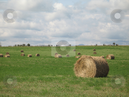 Bales of hay in a field stock photo, Bales of hay in a field by Mbudley Mbudley