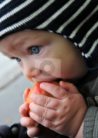 Baby tasting an apple stock photo, Baby boy tasting a newly picked apple outside wearing a cap by Johan Lenell
