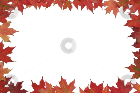 Red maple leaf poster or card. stock photo, Red maple leaves surrounding white background. by Todd Dixon