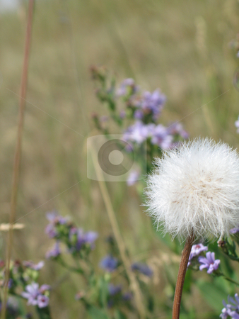 Wild flowers in a field stock photo, Wild flowers in a field by Mbudley Mbudley