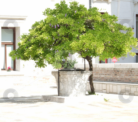 Tree in stone courtyard stock photo, Green tree in white-paved stone courtyard by Erik Lundberg