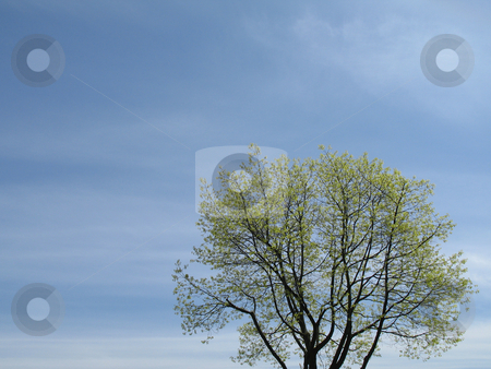 Green tree and blue sky stock photo, Green tree and blue sky by Mbudley Mbudley