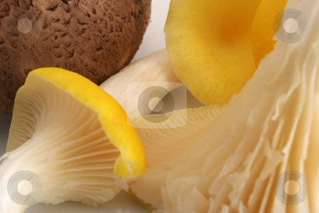 Shittake and Yellow Oyster Mushrooms stock photo, A full frame of Shittake and Yellow Oyster Mushrooms by Steve Smith