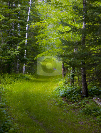 Green Track Through Wet Forest stock photo, A green track through the wet North Woods of Minnesota. by John McLaird