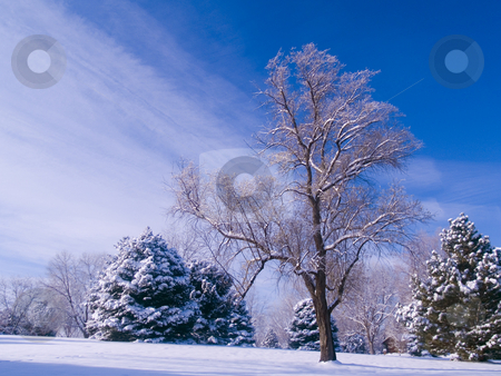 Frosted Park and Blue Sky stock photo, A frosted park on a winter morning by John McLaird