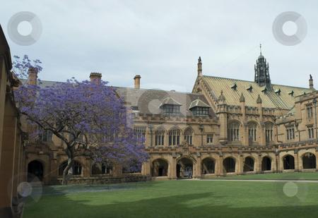 Sydney University Quadrangle stock photo, Gothic revival architecture at sydney university, australia by Stephen Gibson
