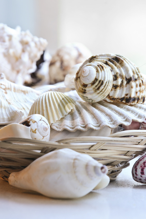 Seashells stock photo, Several various seashells in a basket close up by Elena Elisseeva