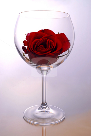 Wine glass with rose stock photo, Red rose blossom inside of a red wine glass by Elena Elisseeva