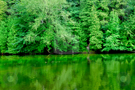 Green reflections stock photo, Green reflection of a forest in  calm river water by Elena Elisseeva