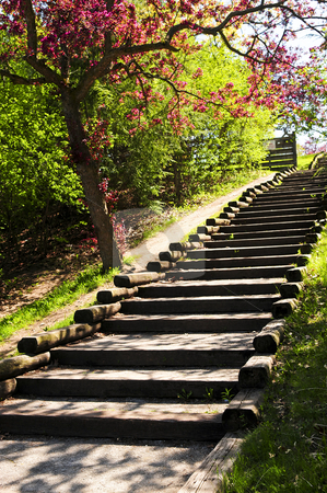 Wooden stairway in a park stock photo, Wooden stairway in a spring park with blooming apple tree by Elena Elisseeva