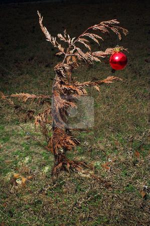 Christmas Ornament stock photo, A Christmas ornament on a dead tree. by Robert Byron