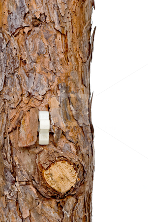 Lightswitch in a tree trunk stock photo, Lightswitch in a tree trunk, can represent renewable resources or consumption of resources/forests by Vince Clements