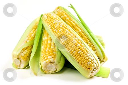 Corn ears on white background stock photo, Ears of fresh corn isolated on white background by Elena Elisseeva