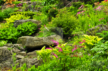 Rock garden stock photo, Rock garden with various plants and flowers by Elena Elisseeva
