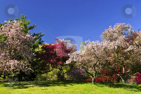 Blooming fruit trees in spring park stock photo, Landscape of blooming fruit trees in spring park by Elena Elisseeva