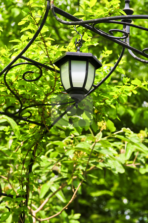 Arbor with lantern stock photo, Wrought iron arbor with lantern in lush green garden by Elena Elisseeva
