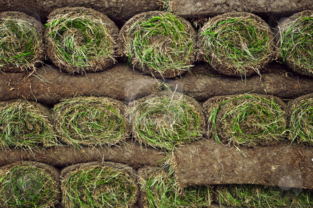 Rolled sod stock photo, Stack of rolled grass sod or turf for lawns and landscaping by Elena Elisseeva