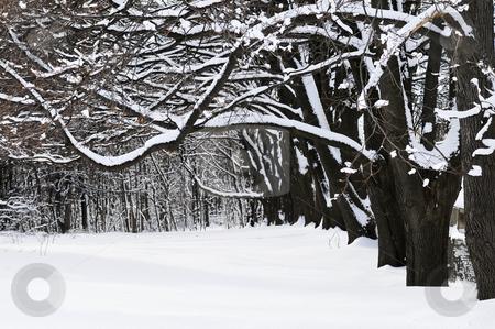 Winter park stock photo, Winter park in Toronto after heavy snowfall by Elena Elisseeva