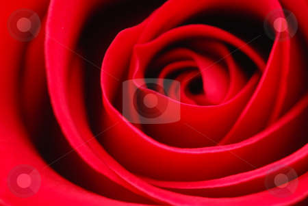 Red rose stock photo, Extreme macro of bright red rose petals by Elena Elisseeva