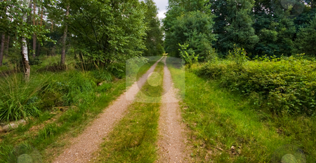 Sandy road forest  stock photo, Sand path in a rural forest environment by Karin Claus