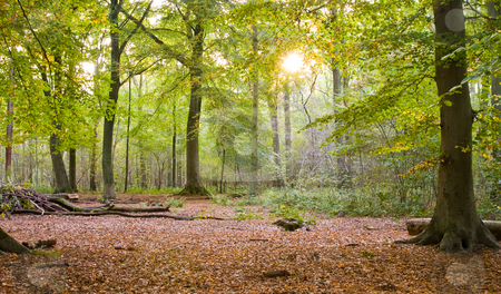 Starting fall forest stock photo, Starting fall season in a forest with sun coming trough by Karin Claus