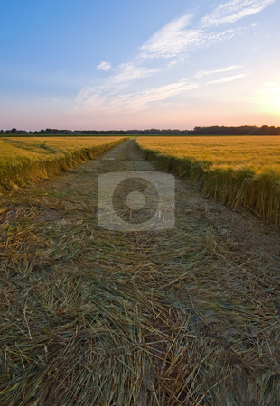 Fresh mowed stock photo, Fresh mowed farmlandscape in the late afternoon by Karin Claus