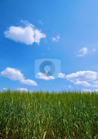 Green pasture stock photo, Green pasture with blue sky and clouds by Karin Claus