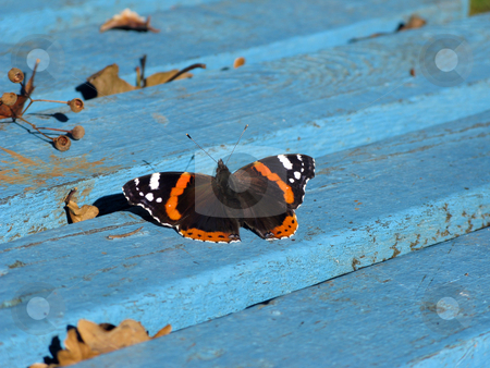 Butterfly on blue bench stock photo, Butterfly on blue bench in an autumn park by Roman Vintonyak
