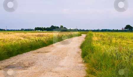 Rural scene stock photo, Country road with cereals almost ready for the harvest by Karin Claus