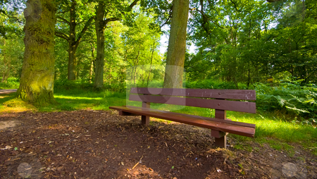 Park bench stock photo, Brown parkbench in a very bright green forest by Karin Claus