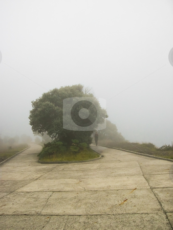 Foggy scenery with tree stock photo, Foggy scenery with tree and human silhouette in the distance infront a nice pathway by Karin Claus