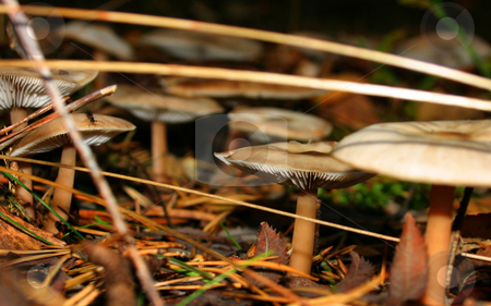 Forest floor stock photo, Nice mushrooms growing on the forest floor by Arve Bettum