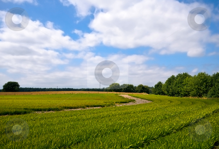Bright green agriculture farmland   stock photo, Bright green agriculture farmland with cloudy blue sky by Karin Claus