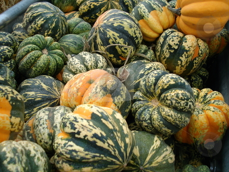 Crate Full of Gourds stock photo, A crate full of harvest gourds at a festival near Denver, Colorado. by Ben O'Neal