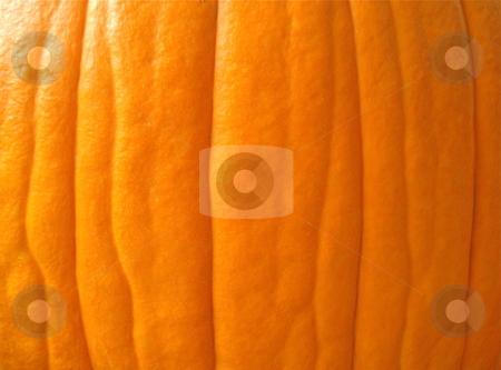 Pumpkin Texture Background stock photo, A macro shot of a pumpkin reveals hidden texture and pattern. by Ben O'Neal