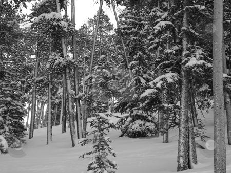Snow Covered Forest stock photo,  by Ben O'Neal