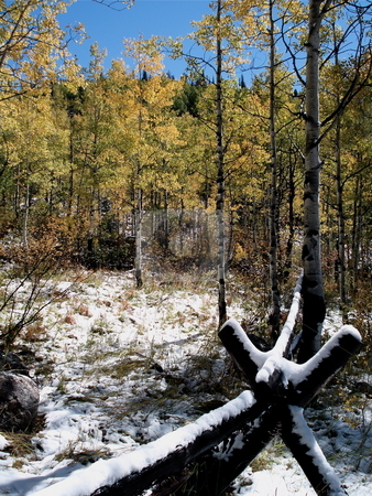 Fence in the Woods stock photo, A snow-covered fence in the woods near Steamboat Springs, Colorado in early Fall. by Ben O'Neal