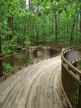 Curved Path in the Woods stock photo, A raised, curved path winds through the woods in Arkansas. by Ben O'Neal