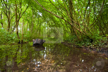 Summer forest with creek  stock photo, Summer forest with a running creek and some reflections in the water by Karin Claus