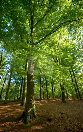 Green forest stock photo, Bright green sunny forest with brown floor by Karin Claus