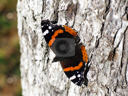 Butterfly stock photo, Butterfly on tree in an autumn forest by Roman Vintonyak