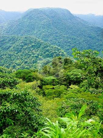 Topical viewpoint  stock photo, Viewpoint of a colorfull rainforest with mountains by Karin Claus