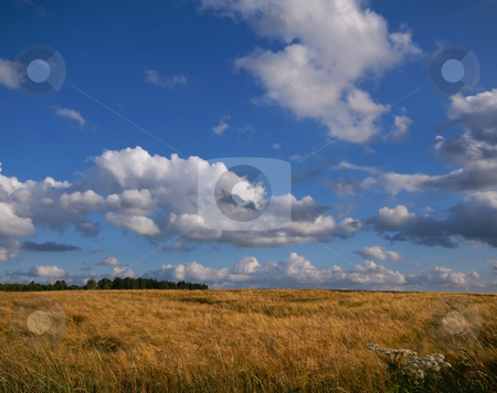 Almost ready for the harvest  stock photo, Farm land almost ready for the harvest with blue sky by Karin Claus