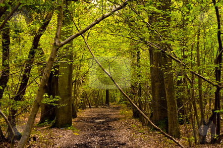 Mystery forest stock photo, Mystery forest with nice green leaves and a brown forest floor by Karin Claus